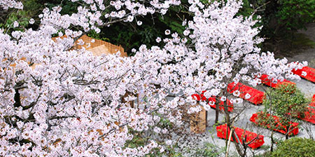 桜の宴イメージ